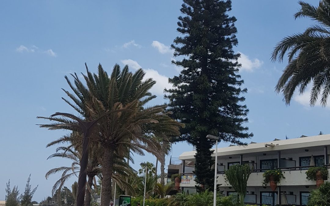 Maspalomas (Gran Canaria) 2019. április