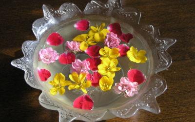 Képek a virágainkról 1.